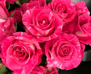 Roses Wild Topaz Roses in Kelowna, BC | BLOOMERS FLORAL DESIGNS & GIFTS
