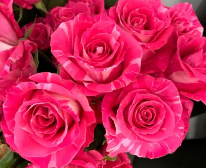 Roses Wild Topaz Roses