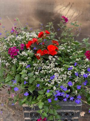 Round flower planter  in Laurel, MT | PLANTASIA FLOWERS, PLANTS & GIFTS