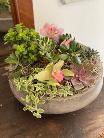 Round Succulent Arrangement