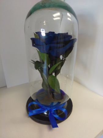 Royal Blue Enchanted Rose Rose