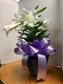Royal Easter Lily Plant