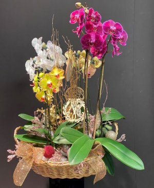 Royal Orchid Basket Live Plants in Galveston, TX | J. MAISEL'S MAINLAND FLORAL