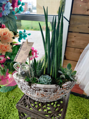 Rubble boat succulents  in Windsor, ON | K. MICHAEL'S FLOWERS & GIFTS