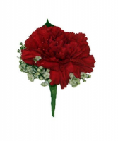 Ruby Carnation Boutonniere