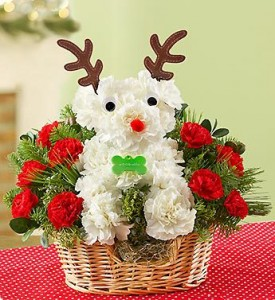 Rudolph The Red-Nose Pup a-DOG-able in Mokena, IL | An English Garden Flowers & Gifts