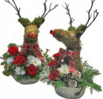 Rudy the red nosed reindeer  Cut flowers in oasis lined  basket