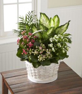 Rural Beauty Blooming Planter