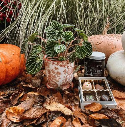 Cabin in the Woods Plant, Chocolate, Candle & Gift Card