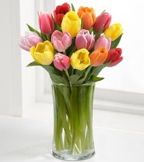 RUSH OF SPRING COLOR ASSORTED TULIPS