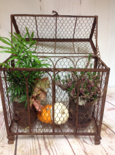 Rustic autumn medium Live plants