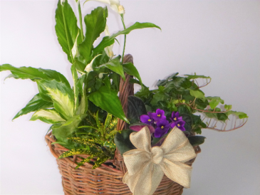 Rustic Basket Garden green and blooming plants