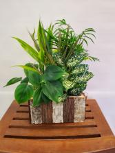 Rustic Dish Garden Plant
