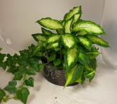 Rustic Leaf planter in metal basket