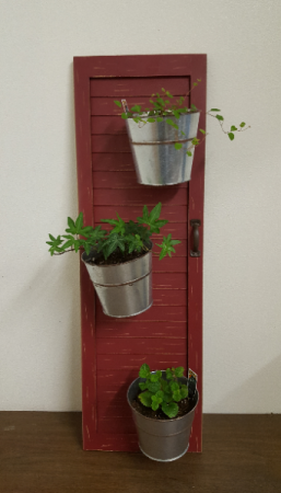 rustic shutter with real plants Plant