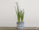 Rustic Snowflake Tin Paperwhites Plant