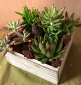 Rustic Succulent Succulent Desk Planter