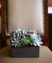 Rustic Succulents