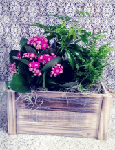 Rustic Wooden Crate with Blooming & Green Plants