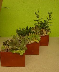 Rustic wooden vases with succulents Las Vegas Plants