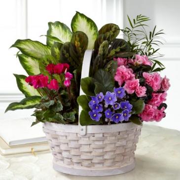 S29-5008S Plant Basket