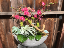 Elegant Orchids with succulents