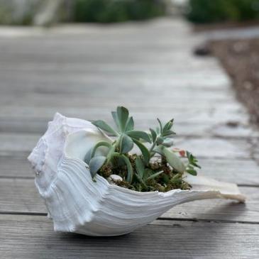 Salty Succulent