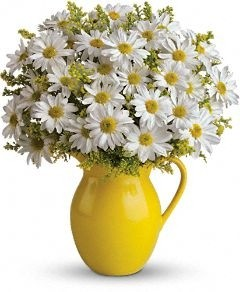 SANNY DAY PICHER OF DAISIES