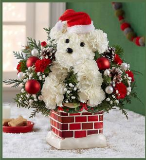 Santa Paws  in Arlington, TX   Erinn's Creations Florist