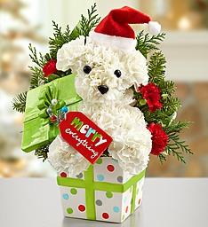 Santa Paws Fun Festive Christmas Arrangment
