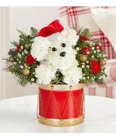 Santa Paws holiday