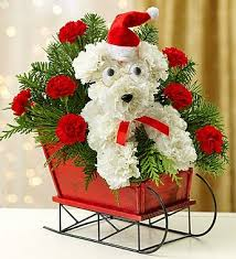 SANTA PAWS IN SLEIGH   in Lexington, KY | FLOWERS BY ANGIE