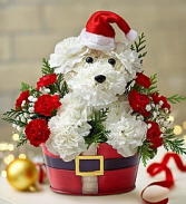 Santa Paws  Mixed Flowers Holiday Colors