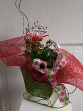 Santa's Kalanchoe Blooming Plant Arrangement
