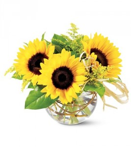 Sassy Sunflowers TF-F11