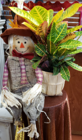 Scare-Croton Novelty Scarecrow and Croton Plant