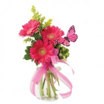 3 Sweet Gerbera Daisies with butterfly arranged in a vase!