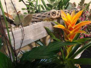 Seasonal and Custom Single Plants and Dish Gardens in Boise, ID | HEAVENESSENCE FLORAL & GIFTS