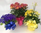 Seasonal Blooming Plants