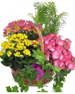 Seasonal Garden Basket.  We will create a seasonal design  in Ozone Park, NY | Heavenly Florist