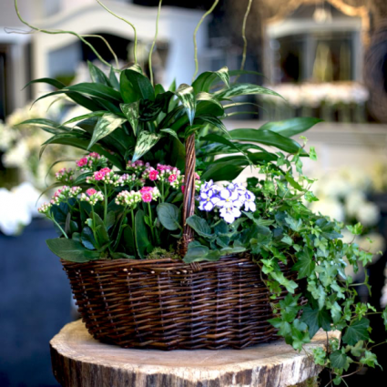 Seasonal Plant Basket