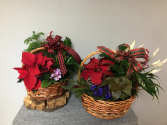 Season's Greetings Euro Basket