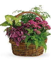 Secret Garden Basket  Blooming Plants