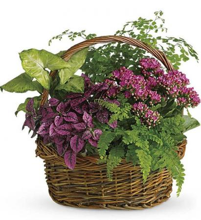 Secret Garden Basket Flowering Plants