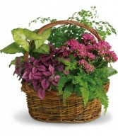 Secret Garden Basket H962A