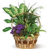 Secret Garden Basket Plant Basket