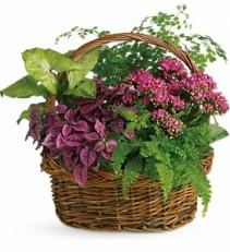 Secret Garden Basket Plants