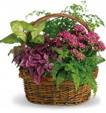 Secret Garden Basket T96-2A