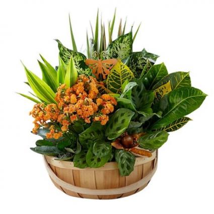 Secret Garden Plant Basket for Fall