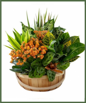 SECRET GARDEN PLANT BASKET FOR FALL  in Arlington, TX | Erinn's Creations Florist